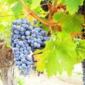 Wine Valleys