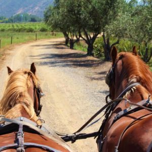 Horse Carriage & Wine Tour Chile