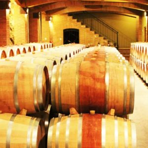 Boutique Winery Tour Maipo Valley