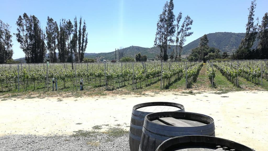 Wine fields and barrels in the Casablanca Valley